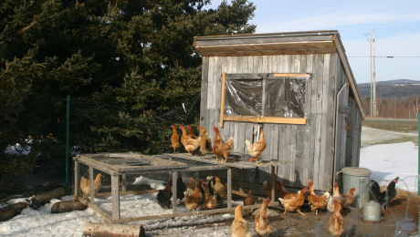a chicken coop with snow on the ground