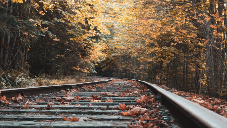 railroad tracks the autumn
